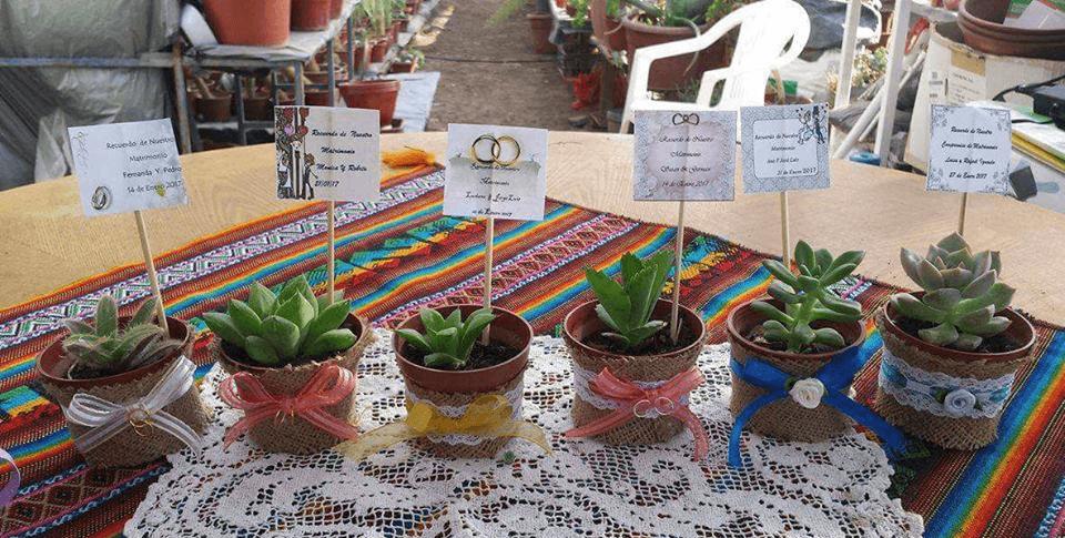 Souveniers Cactus Y Suculentas Arica Munay