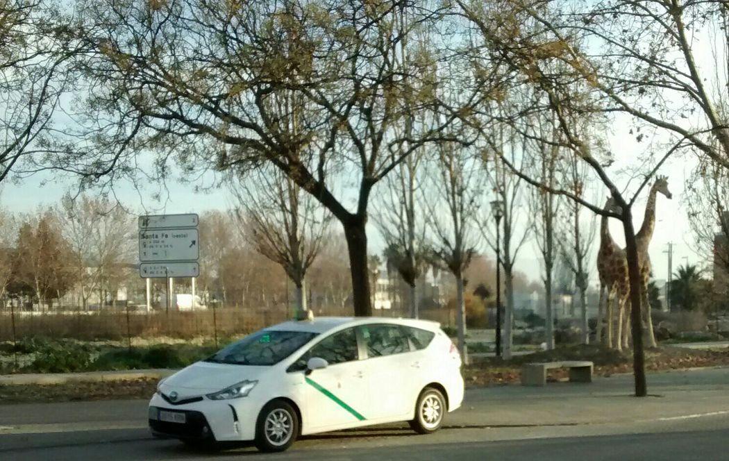 Bodas Taxi Clásic