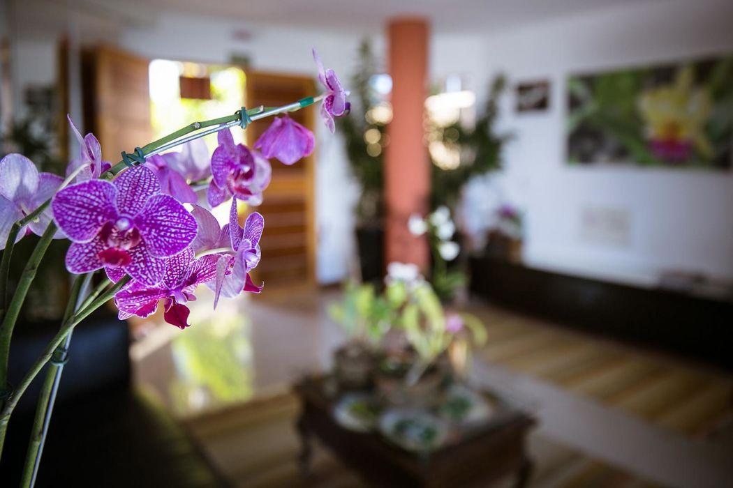 Orquídea Café