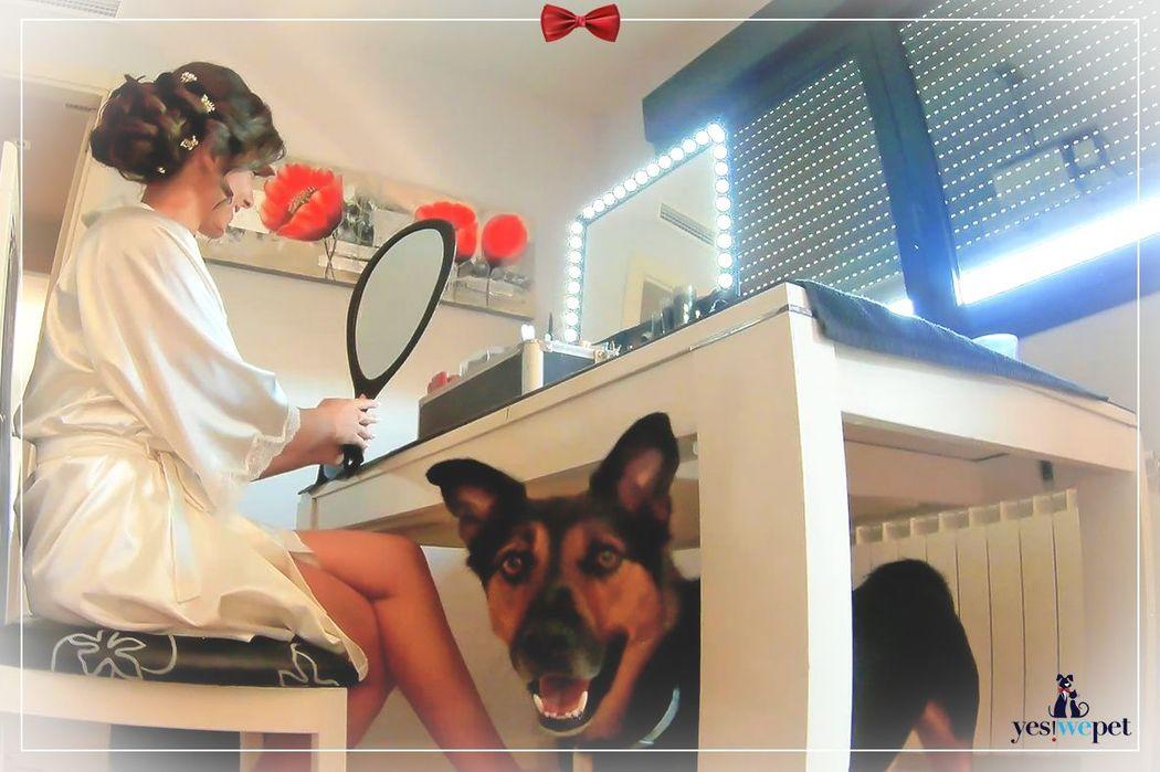 En los preparativos de boda con el perro