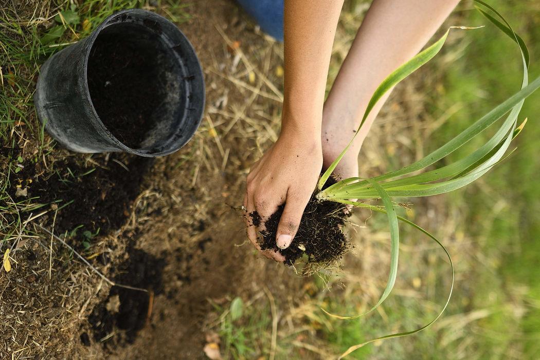 Ecoprint: Detalles que salvan el planeta