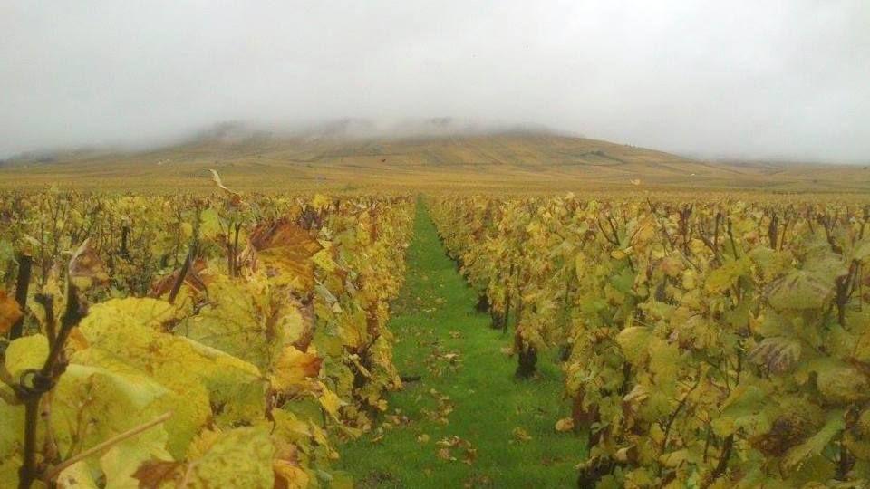 Vignes en automne Champagne Bourgeois-Boulonnais
