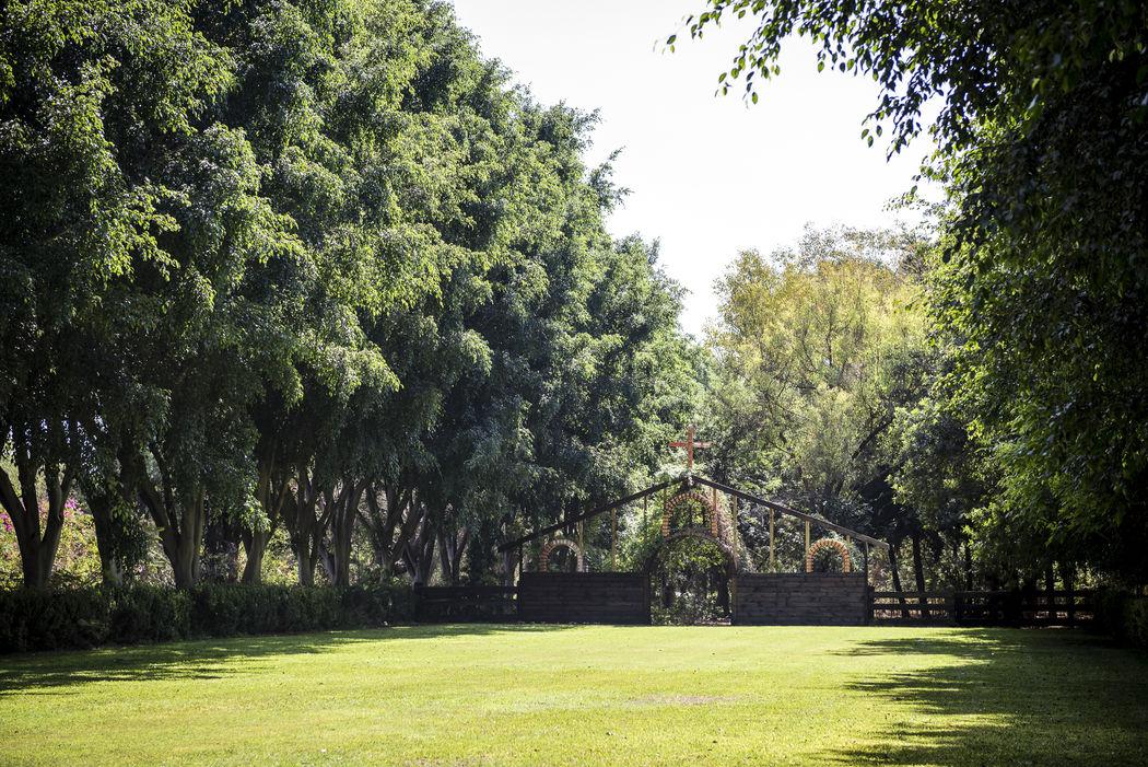 Jardín Ficus