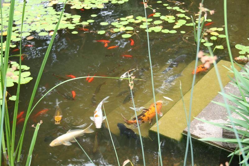 Beispiel: Koys im Traumgarten, Foto: Traumgarten Thalwil.