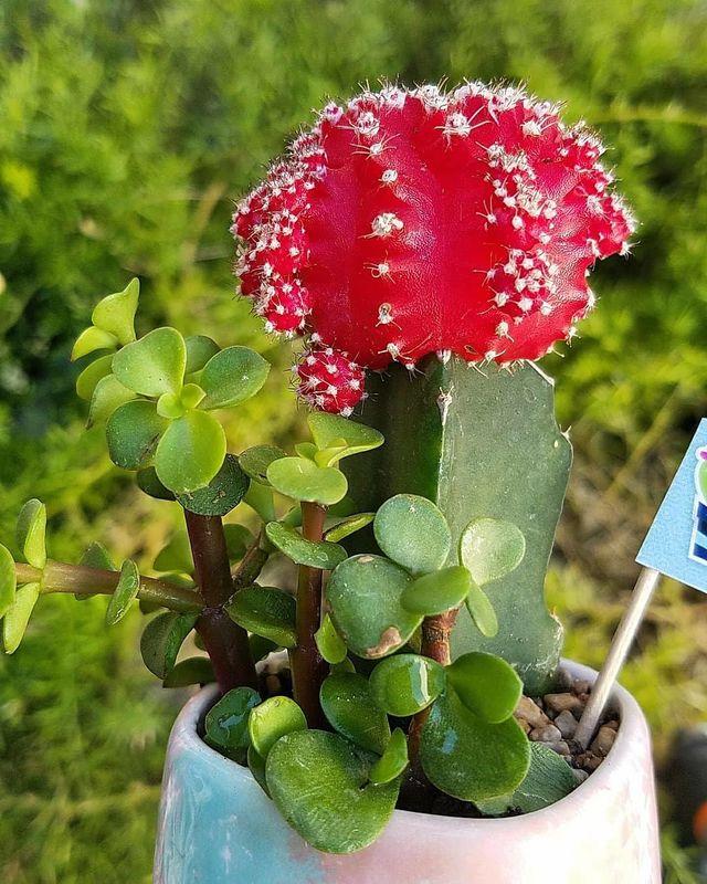 Amor Eterno Cactus y Suculentas