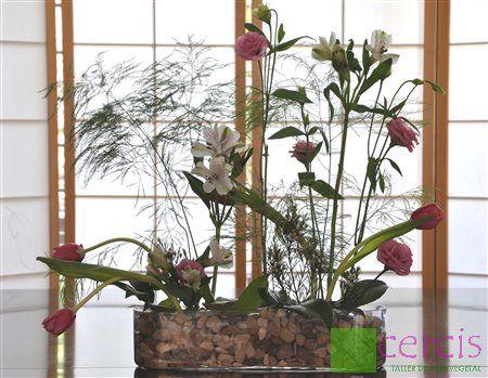 Cercis Taller de Arte Vegetal