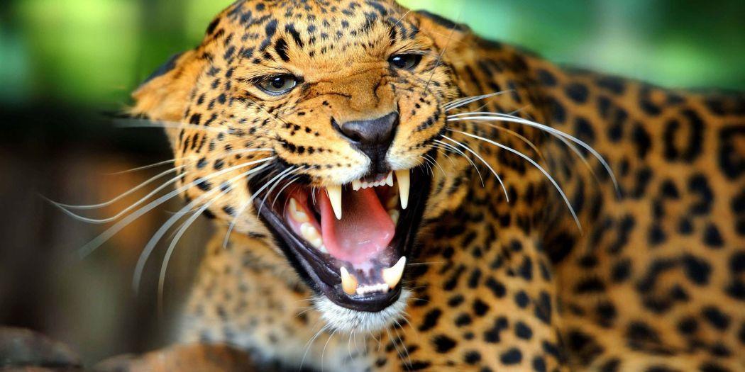 Safaris en África