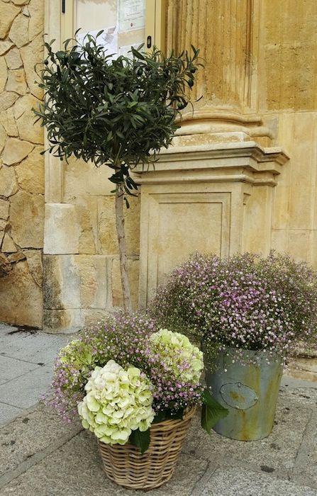 entrada con paniculata rosa
