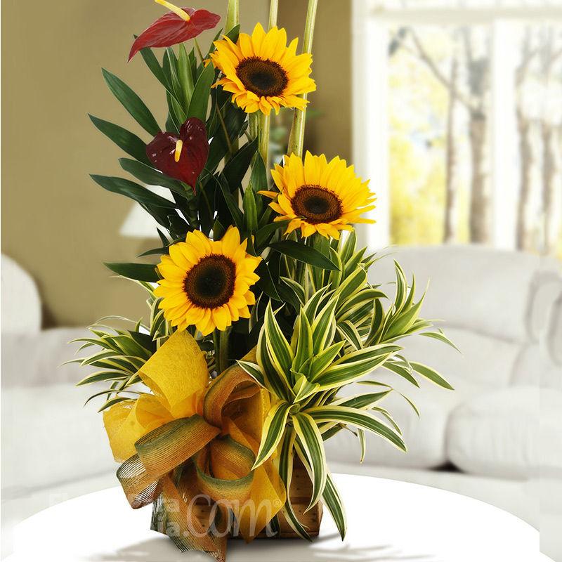 Flores para Colombia