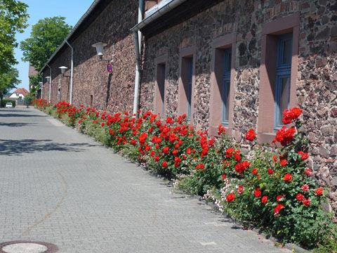 Beispiel: Außenanlagen, Foto: Schloss Langenselbold.