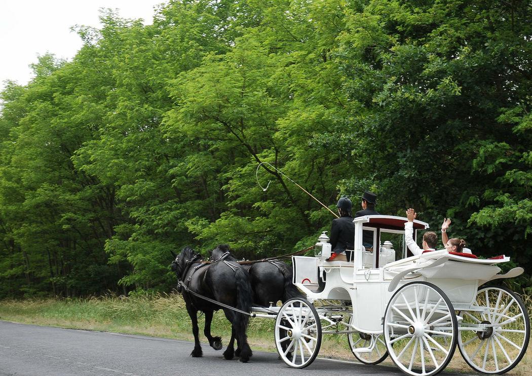 Beispiel: Hochzeitskutsche, Foto: Reinweiss Hochzeiten.