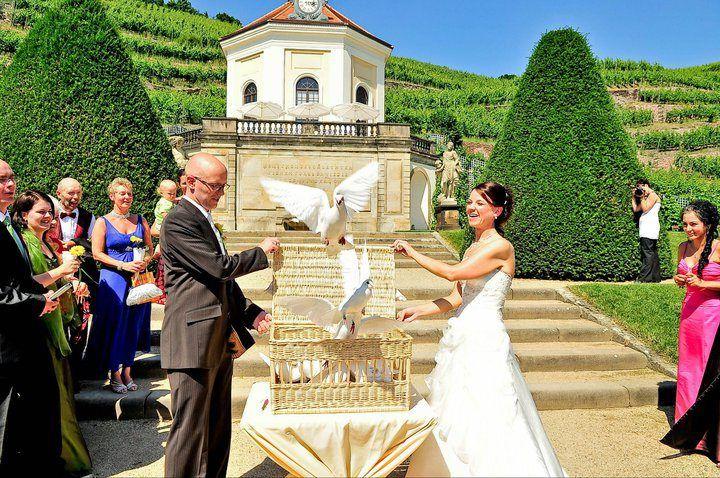 Beispiel: Hochzeitstauben am Schloss Wackerbarth, Foto: Ihre Hochzeitstauben.