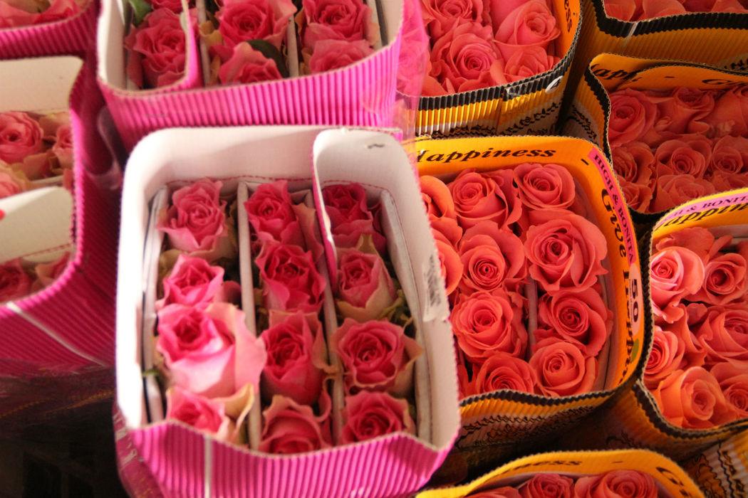 Rosas Coloridas Importadas