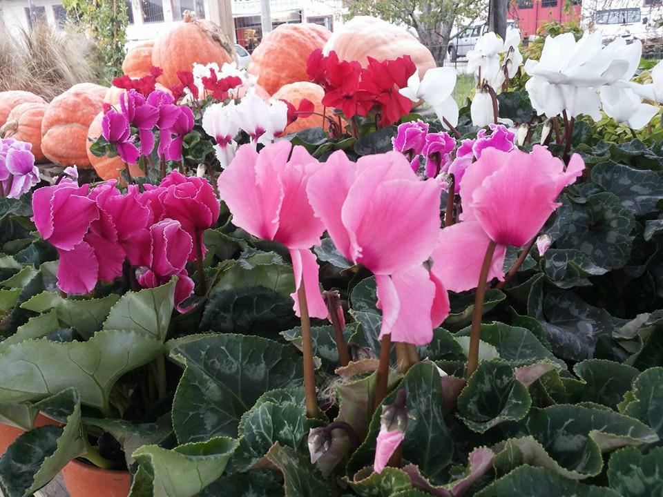 Venere Giardini