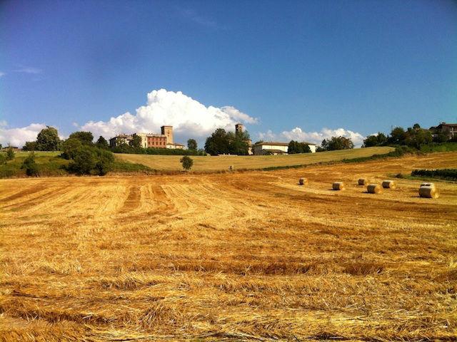 Cascina Alessi - i dintorni, in allegato, il profumo dei campi di grano arsi dal sole a fine giugno