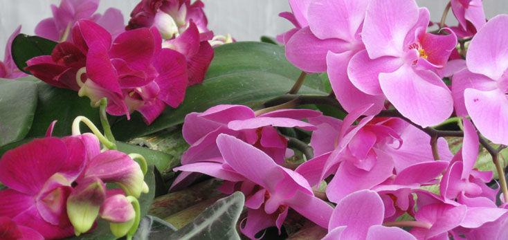 Beispiel: Kreative Blumenarrangements, Foto: Blumenbinder Trittmacher.