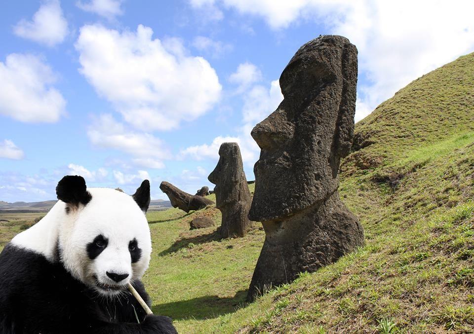 Rolling Pandas srl