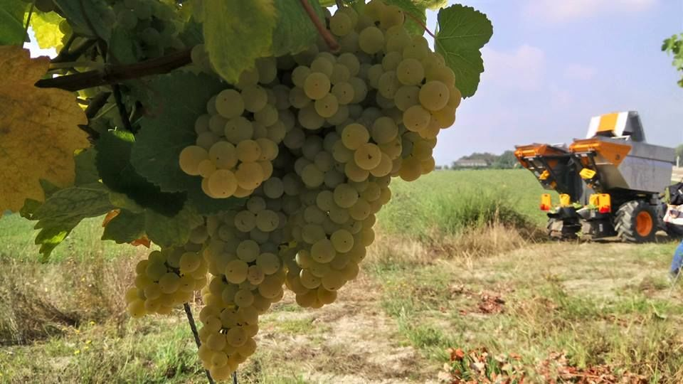 Vinhos Norte