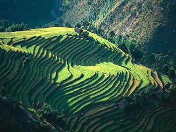 Sri Lanka y sus plantaciones de té - brujulaviajes.com