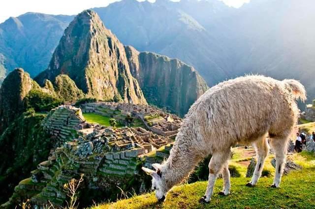 Panamericana Turismo