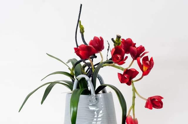 Calliandra Design