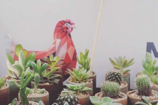 Desértico • Cactus & Suculentas