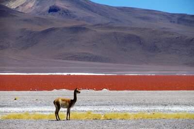 Know Chile Tour